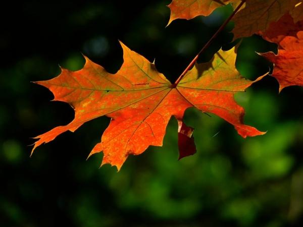 Burcina autunno